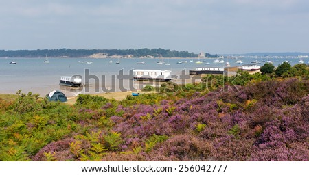 Purple heather with view to Brownsea Island Poole Harbour Dorset England UK viewed from the coast next to the Sandbanks ferry - stock photo