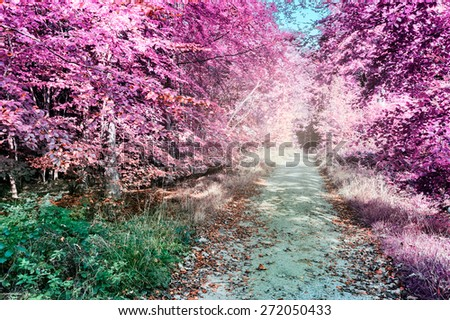 Purple infrared forest landscape with footpath - stock photo