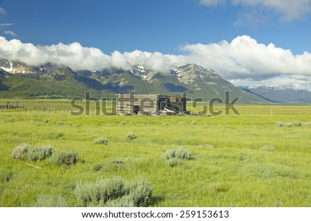 Purple lupine surrounding deserted cabin with mountains in Centennial Valley, near Lakeview, MT - stock photo