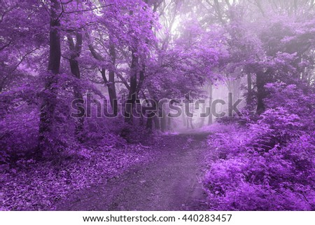 Purple magical leaves on forest path - stock photo