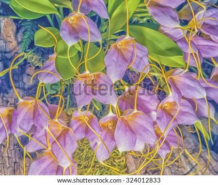 Purple masdevallia orchid flowers,digital oil painting - stock photo