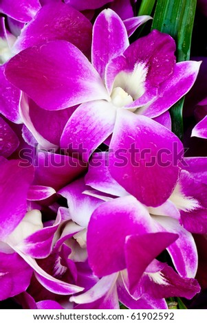 Purple orchid at the Morning market, Chonburi Thailand - stock photo
