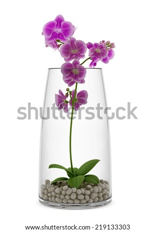 purple orchid flower in glass vase isolated on white background - stock photo