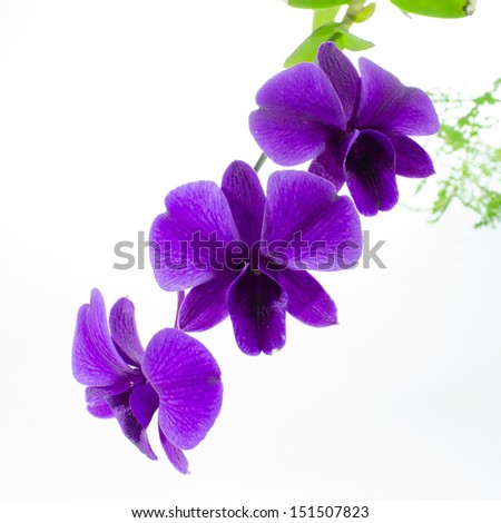 Purple orchid flowers - stock photo