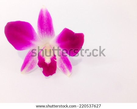 Purple orchid isolate on white background - stock photo