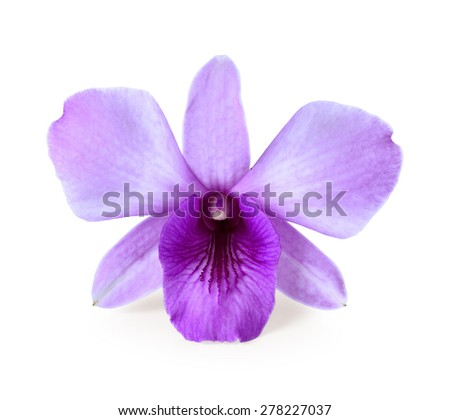 purple orchid isolated on white - stock photo
