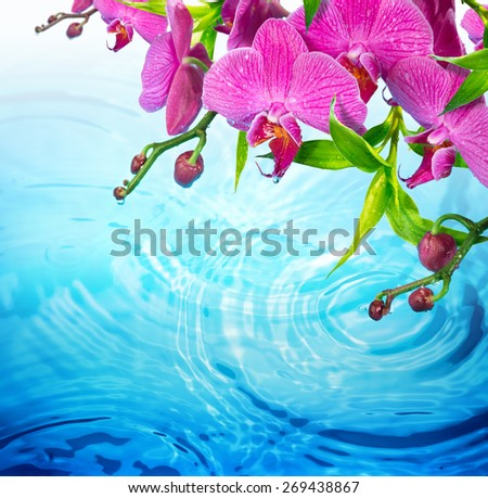 purple orchid on rippled blue water - freshness  concept - beauty in nature  - stock photo