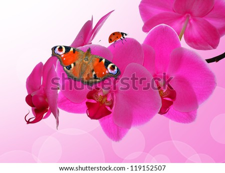 Purple orchid with butterfly- close up with shallow DOF - stock photo