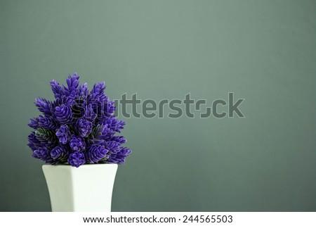 purple plant  for room - stock photo