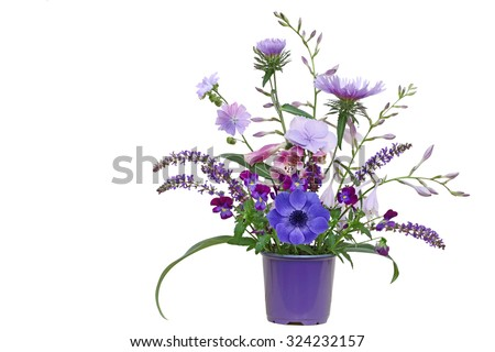 Purple planter with autumn flowers  hosta, aster, pansy, loosestrife, hortensia isolated on white background - stock photo
