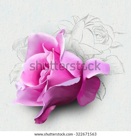 purple rose watercolor close up, with elements of the sketch, watercolor illustration isolated on white background - stock photo