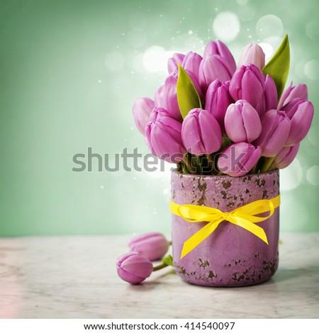Purple tulip bouquet on blue background - stock photo