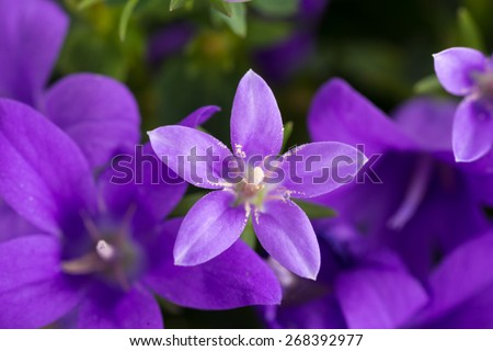 purple vase with bluebells isolated on white background - stock photo