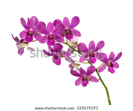 Purple (Violet) orchid on white - stock photo
