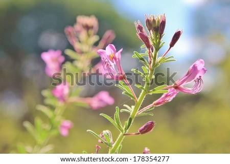 Purple Wild Flower  - stock photo