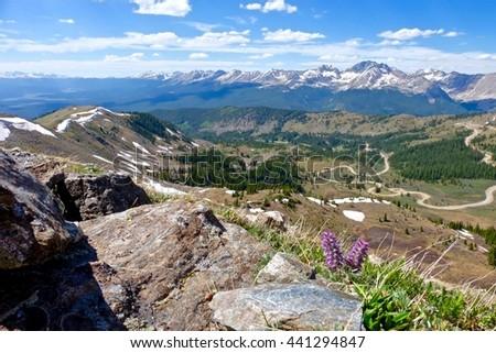 Purple wild flowers and mountain valley view. Alpine Kittentail Flowers or Besseya alpina at Cottonwood Pass near Denver , Colorado, USA - stock photo