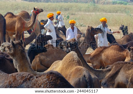 PUSHKAR,INDIA - Circa November 2014 : Unidentified Cameleer sits and stands around their livestock animals and waits for clients to sell them - stock photo