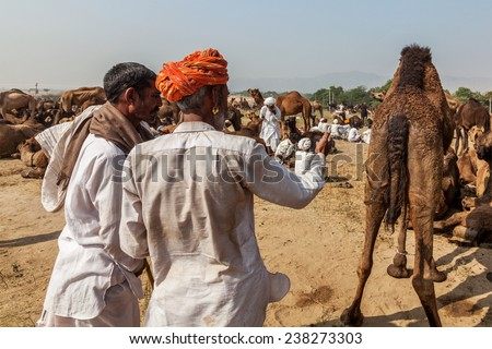 PUSHKAR, INDIA - NOVEMBER 20, 2012: Indian men and camels at Pushkar camel fair (Pushkar Mela) - annual five-day camel and livestock fair, one of the world's largest camel fairs and tourist attraction - stock photo
