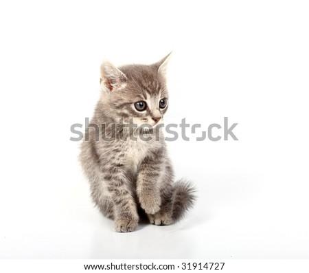 pussy cat - stock photo