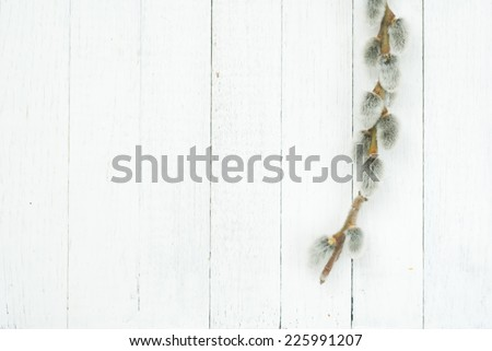 pussy willow twigs on wood background, top view - stock photo