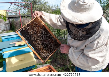 PYATIGORSK, RUSSIA - APRIL 24, 2016: The beekeeper checks honeycomb during the inspection beehive. - stock photo