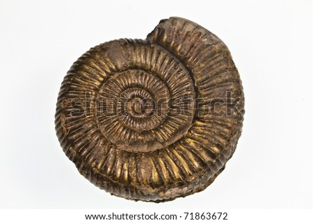 Pyretised ammonite fossil from Whitby, Yorkshire, UK - stock photo