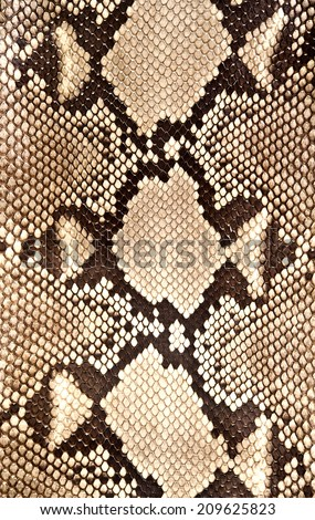 python skin - stock photo