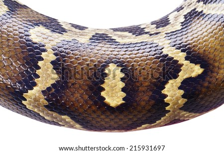 python snake skin  background for curved text  - stock photo