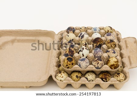 Quail Eggs in cartons withe white background - stock photo