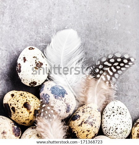 Quail eggs with feathers on vintage grey scratched textured  background with copy space for text. Easter decorations on gray and white board, closeup. - stock photo