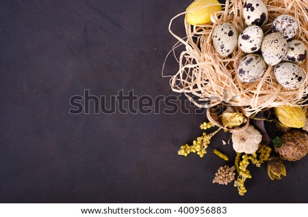 Quail nest with spotted eggs, dried plants on a dark background - stock photo