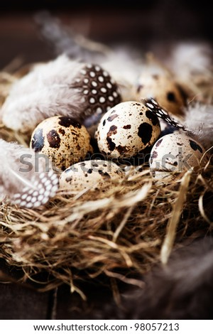 Quail's Eggs and Feathers in a Easter Nest - stock photo