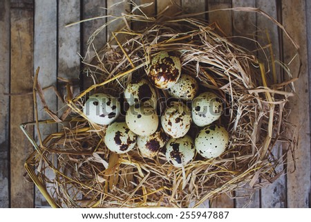 quail spotted eggs in a twig nest on brown background board - stock photo