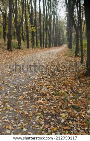quiet autumn landscape in the middle of the fall - stock photo