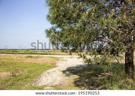 Quiet walking footpath among green bushes and shady trees in the pinewood forest on the Pialassa della Baiona brackish lagoon near Marina Romea along the  Adriatic seaside in Ravenna (Italy) - stock photo