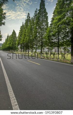 Quiet woods road - stock photo