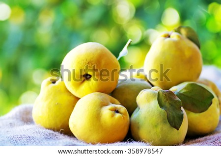 quinces with leaves on the table - stock photo