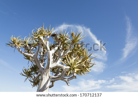 Quiver tree and cloud, Namibia, Karas, Southern Africa - stock photo