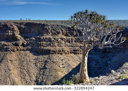 Quiver Tree by the Fish River Canyon in Namibia, Africa. It is the largest canyon in Africa. - stock photo