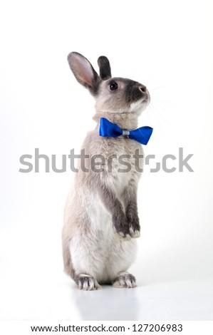 rabbit, - stock photo