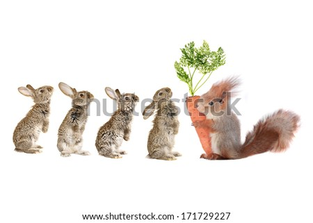 rabbit and gray squirrel with carrot - stock photo