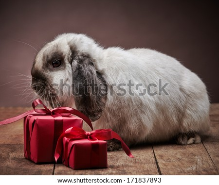 rabbit and red gift boxes - stock photo