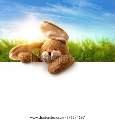 Rabbit and white paper for your text - stock photo