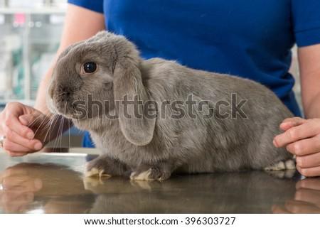 Rabbit at the vet - stock photo
