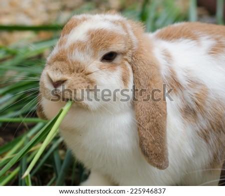 Rabbit eating fresh grass in the garden - stock photo