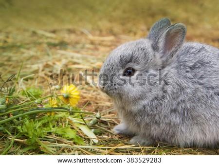 rabbit eating grass - stock photo