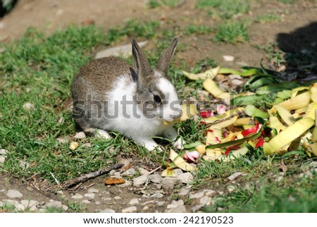 rabbit eating salad and carrots - stock photo
