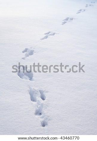 Rabbit footprint trail in newly fallen white winter snow - stock photo