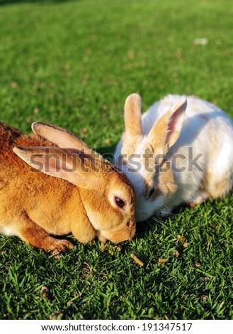 Rabbit in a green grass - stock photo