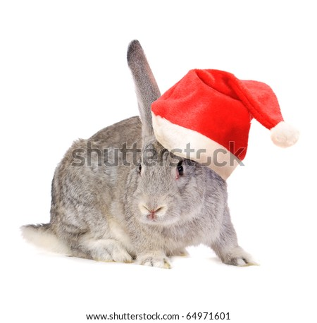 Rabbit in a Santas hat, isolated on white. - stock photo
